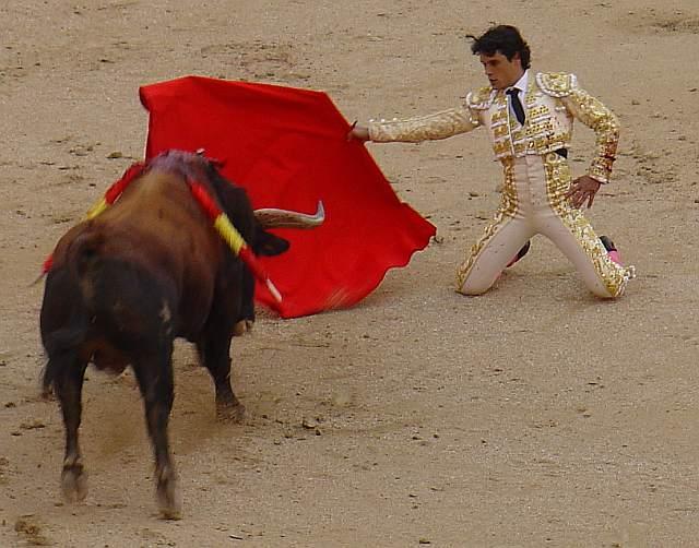 Abellan citando de rodillas a Muelon, toro castaño de 522 kilos nacido en noviembre de 2003 en la ganaderia de Salvador Domecq lidiao el 2º la tarde del 9 de mayo de 2009 en la plaza las Ventas de Madrid, el mismo que a la postre propino al Torer@ 1 tabaco ascendente de 15 centimetros en el muslo izquierdo a la altura de la corva que contusiono el paqueque vasculonervioso, alcanzando el femur y retirandolo al hule cuando le dio muerte sin que volviera a reaparecer el resto de la corrida