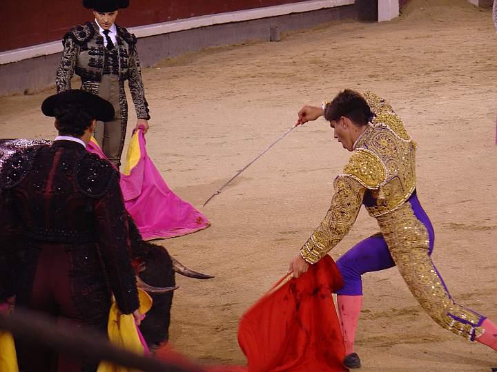 Ruben Pinar | Basilio Mansilla | El Madrileño | Luchador | Carmen Segovia encaste Torrestrella | 475 Kg.