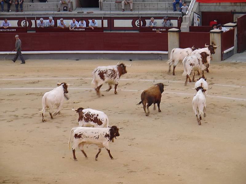 Presidiario, toro Osborne encaste Osborne devuelto a los toriles el 26 de agosto de 2007 en las Ventas