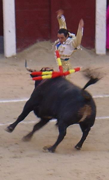 Sanchez Vara ante Cortinero, toro negro bragao de 562 kilos nacido en febrero de 2005 en la ganaderia Escolar encaste Albaserrada Saltillo lidiao el 6º la tarde del 16 de mayo de 2.009 en las Ventas