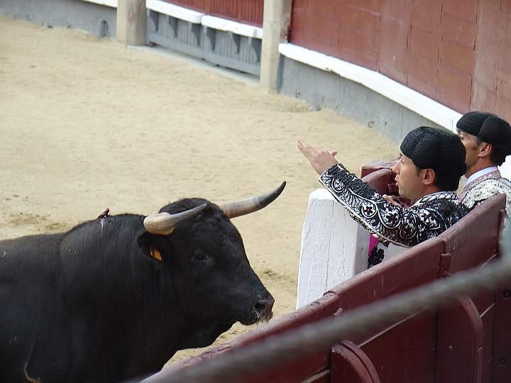 Ricardo Aguin | Doliente | Torreherberos encaste JP Domecq | 500 Kg.