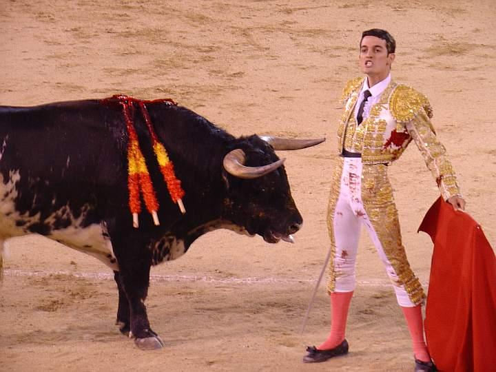 torero Miguel Luque toro Achaparrado ganaderia El Serrano encaste JP Domecq | 520 Kg.