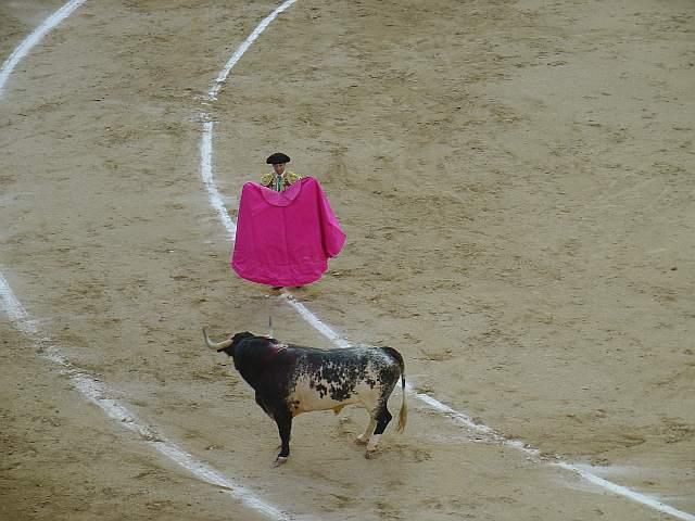 Luis de Pauloba | Aguavivo | Hernández Pla encaste Santa Coloma - Buendia | 549 Kg.
