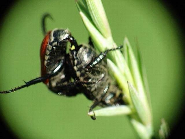 bichos bug error insectos