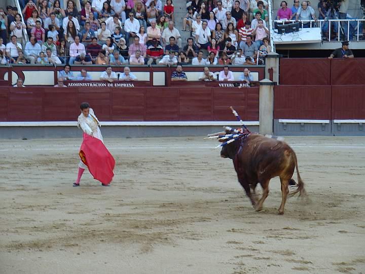 El Sombrerero | Granadero | El Serrano encaste Domecq | 520 Kg.